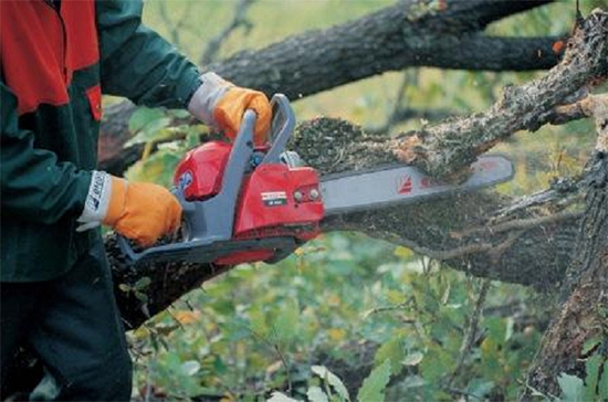 Selecting a chainsaw -